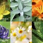Aus Heilpflanzen hergestellte Gele werden per Ultraschall eingeschleust und können Schmerzen lindern. V-sonic VWT